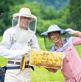 東北地方の蜂蜜