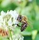 国産蜂蜜の通販サイト・ハニープラント|日本ミツバチ