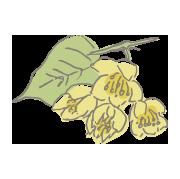 国産生蜂蜜の通販サイト・ハニープラント|夏採り