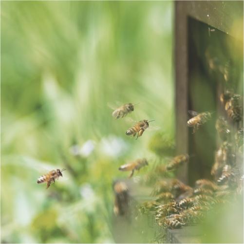 国産生蜂蜜 生産環境へのこだわり POINT3