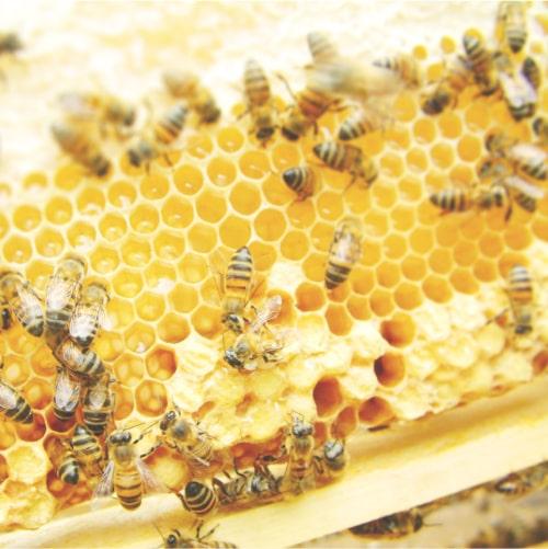 国産蜂蜜 品質へのこだわりPOINT2