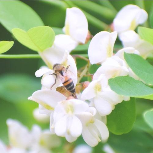 国産はちみつの通販サイト・ハニープラントの国産蜂蜜 非加熱・無添加へのこだわり POINT2