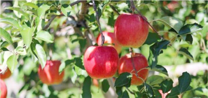 信州立科産リンゴはちみつ&軽井沢産山桜はちみつセット S(50g×2)