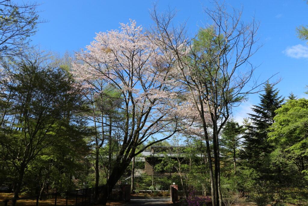 軽井沢産山桜はちみつ Mサイズ(120g)