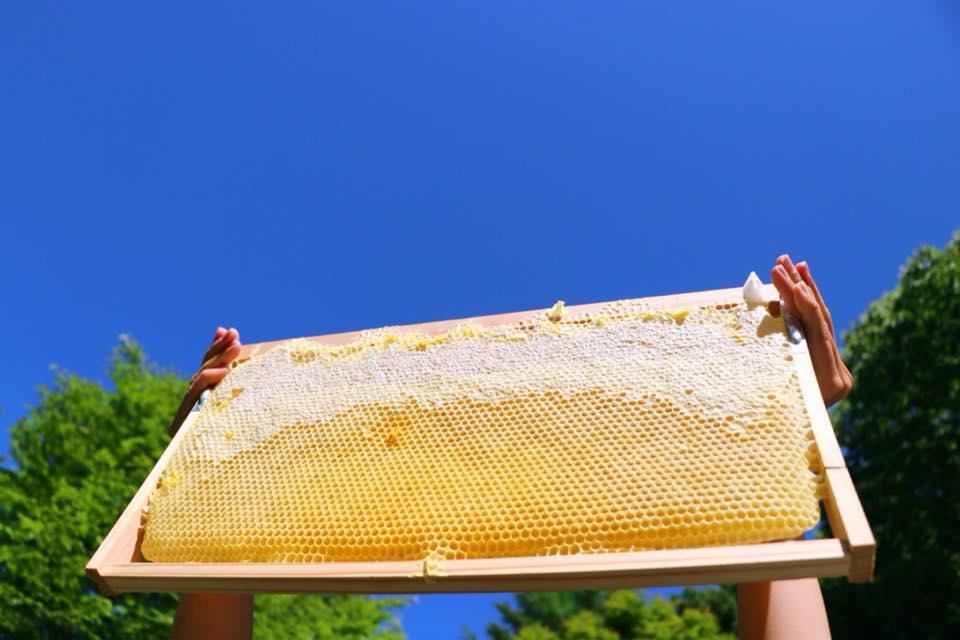 軽井沢産百花蜜、販売がはじまります。
